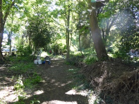 Free forest school West Norwood Lambeth London-4
