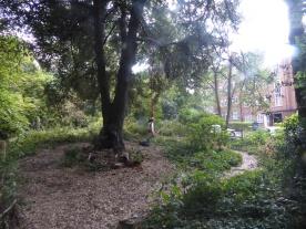 Free family forest school West Norwood Lambeth London-3