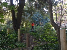 Free family nature session Knights Hill Wood West Norwood London-1