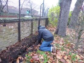 Tree planting Tivoli Park West Norwood Lambeth London-8